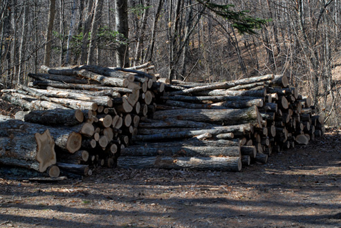essay on the woodpile by robert frost